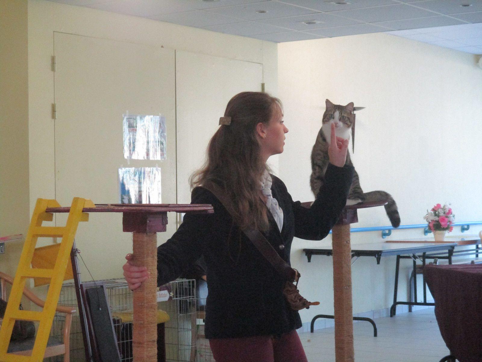 """Spectacle Le chat Piteau avec """" Minouche et Bastet"""""""