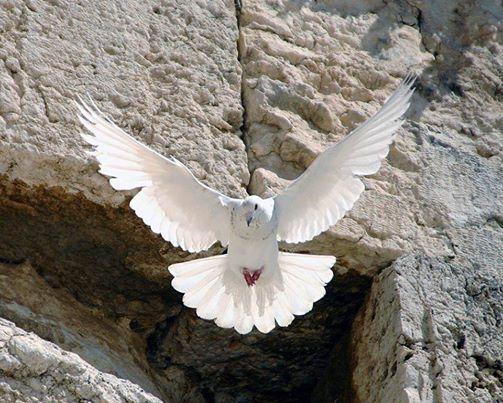 Une vie régie par le Saint-Esprit fera preuve d'un respect méticuleux envers les principes spirituels.