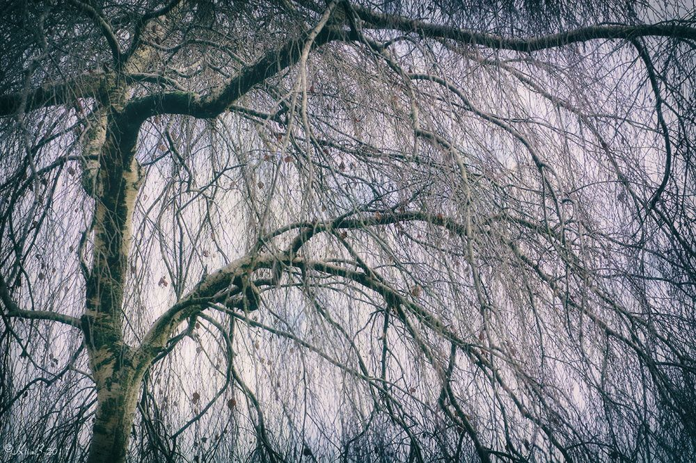 Supplique de l'arbre