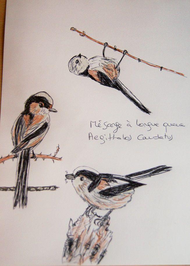 voici les dessins des petites mésanges oiseaux totem de Millah