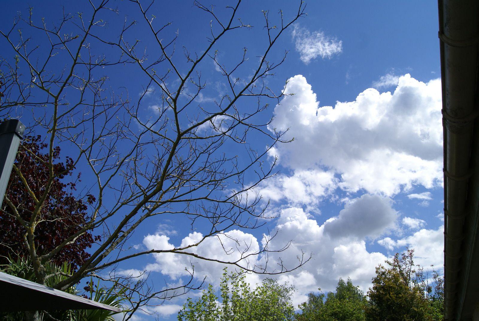 Ce que dit le ciel