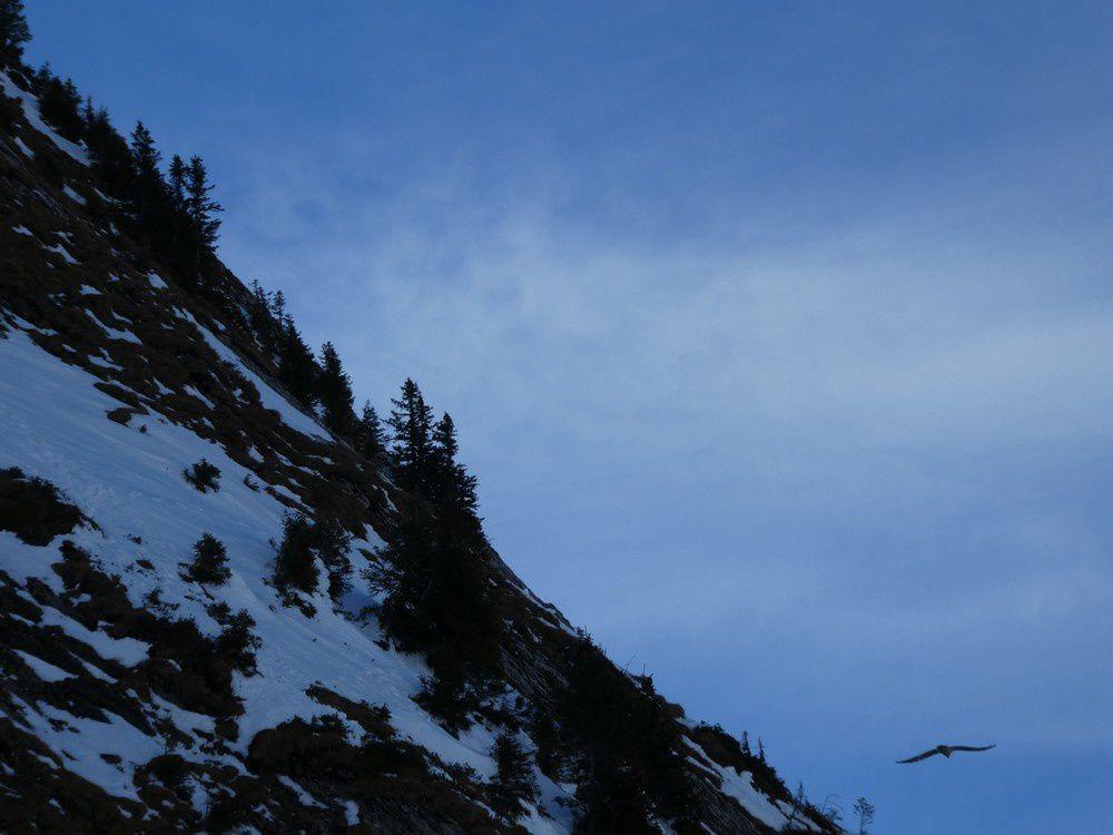 Hermine - Mont Charvin - Gypaete Barbu