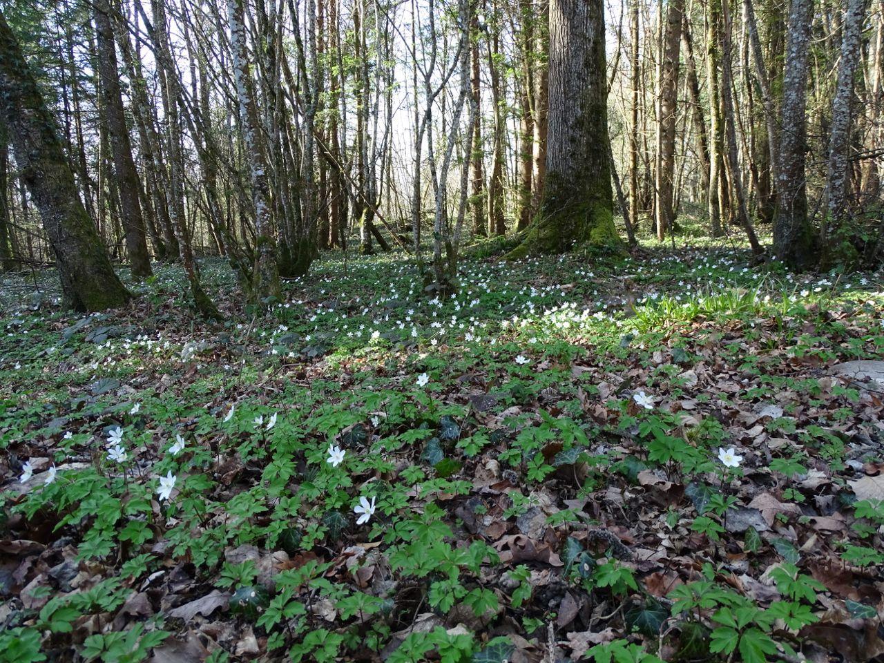 A Rothonne au printemps...