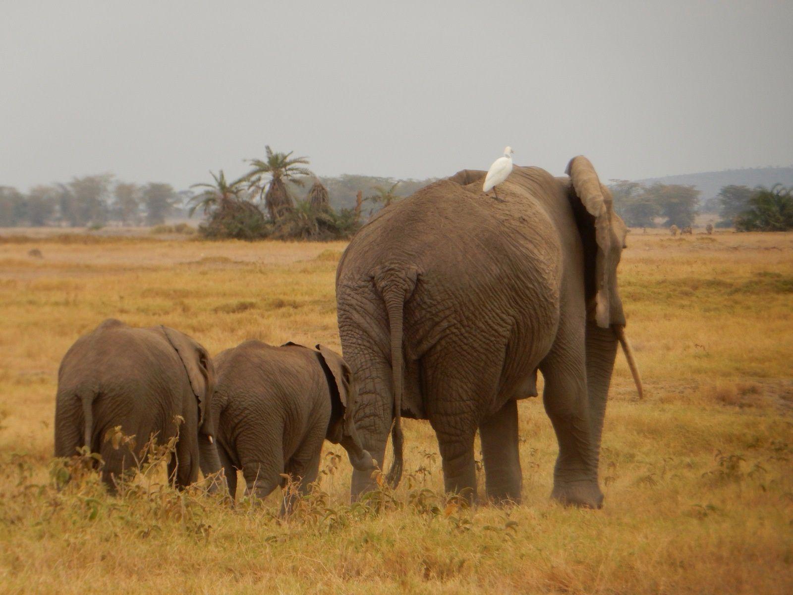 Amboseli, Kenya - Septembre 2016