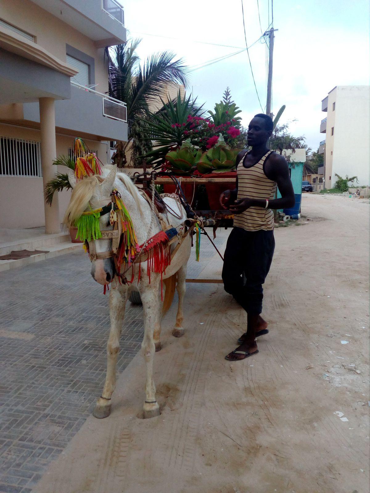 On emménage à Dakar! Mai 2017
