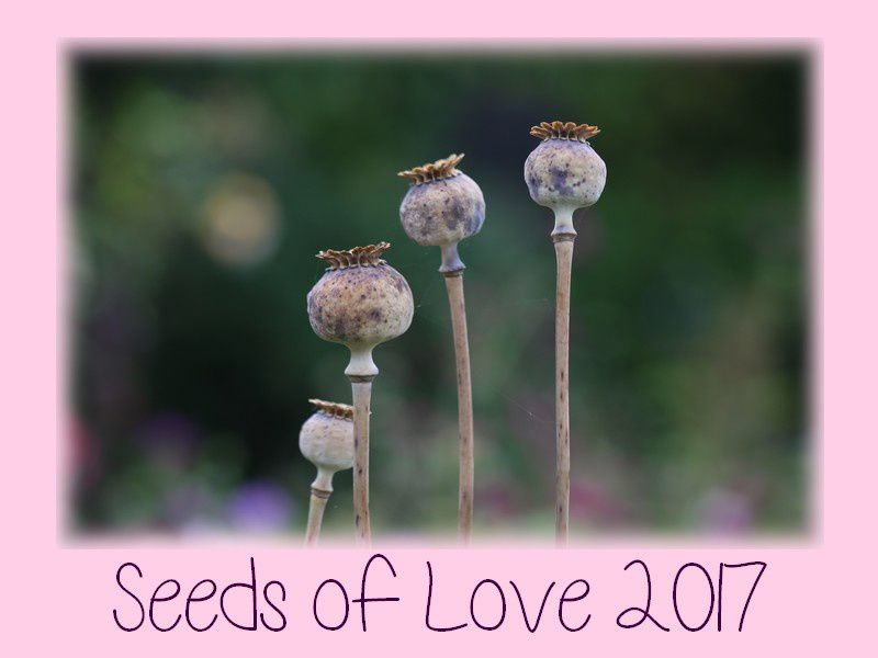 Seeds of Love 2017,