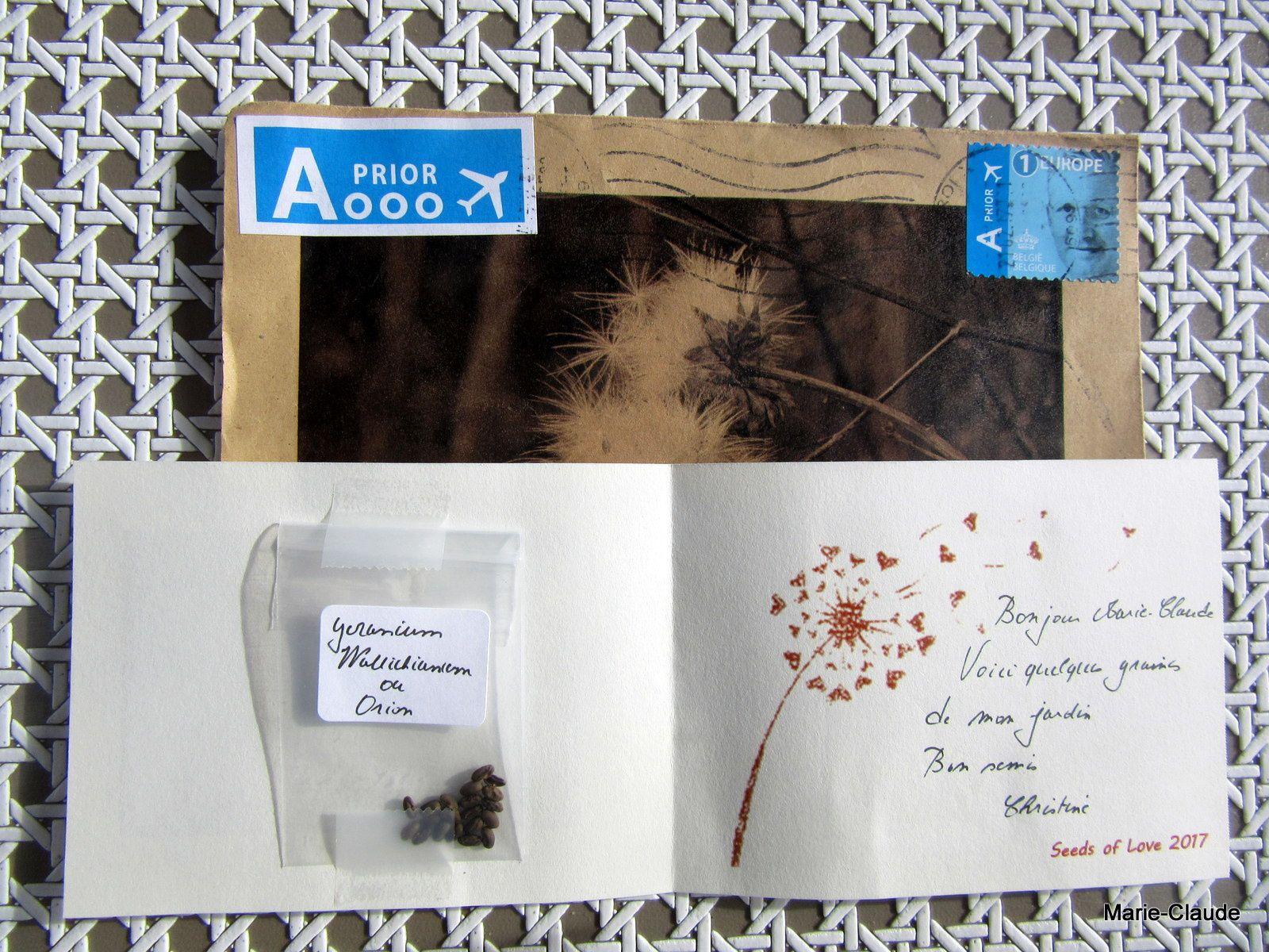 Semis de Geranium vivace,