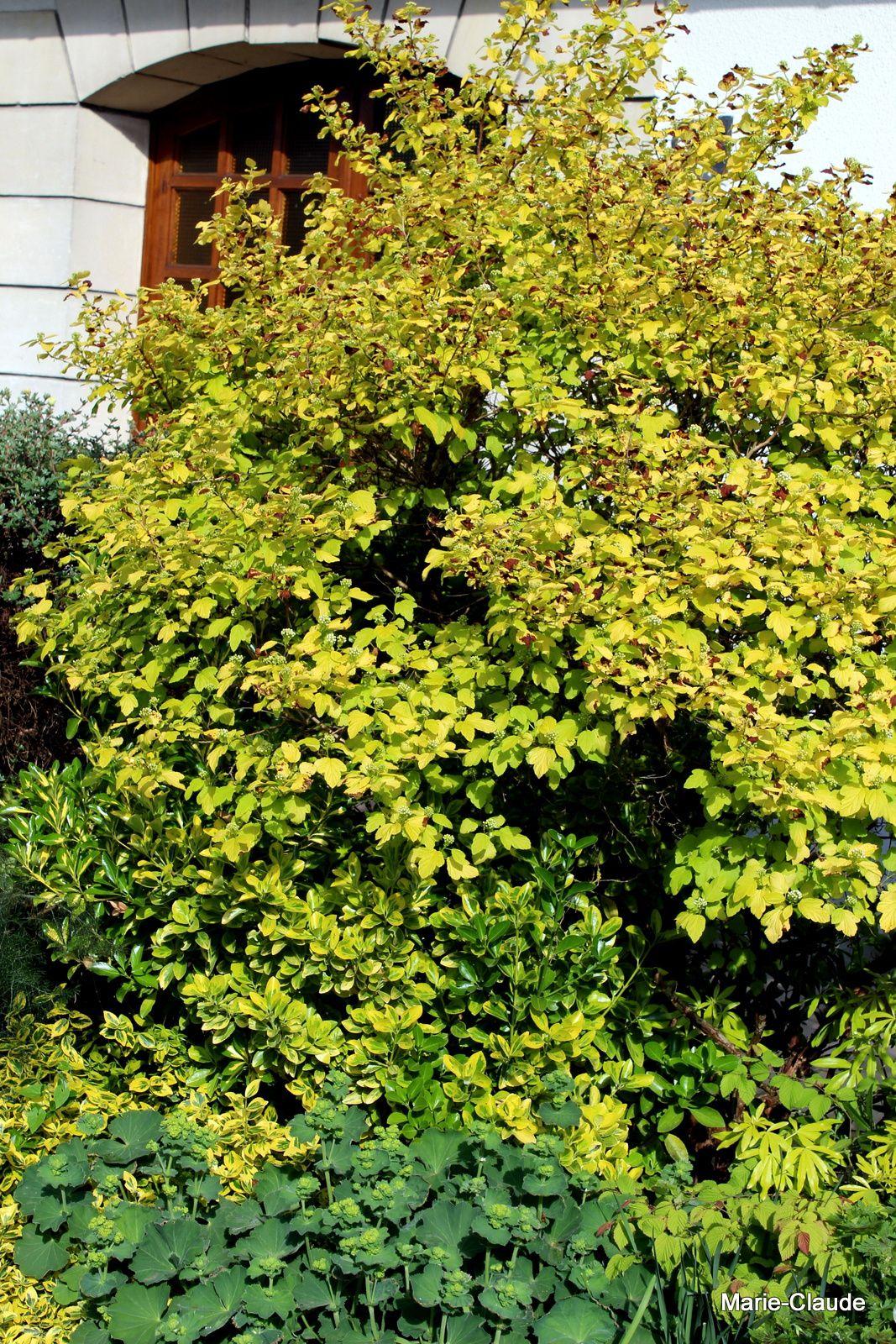 Des plantes pour éclairer l'ombre ( 1)