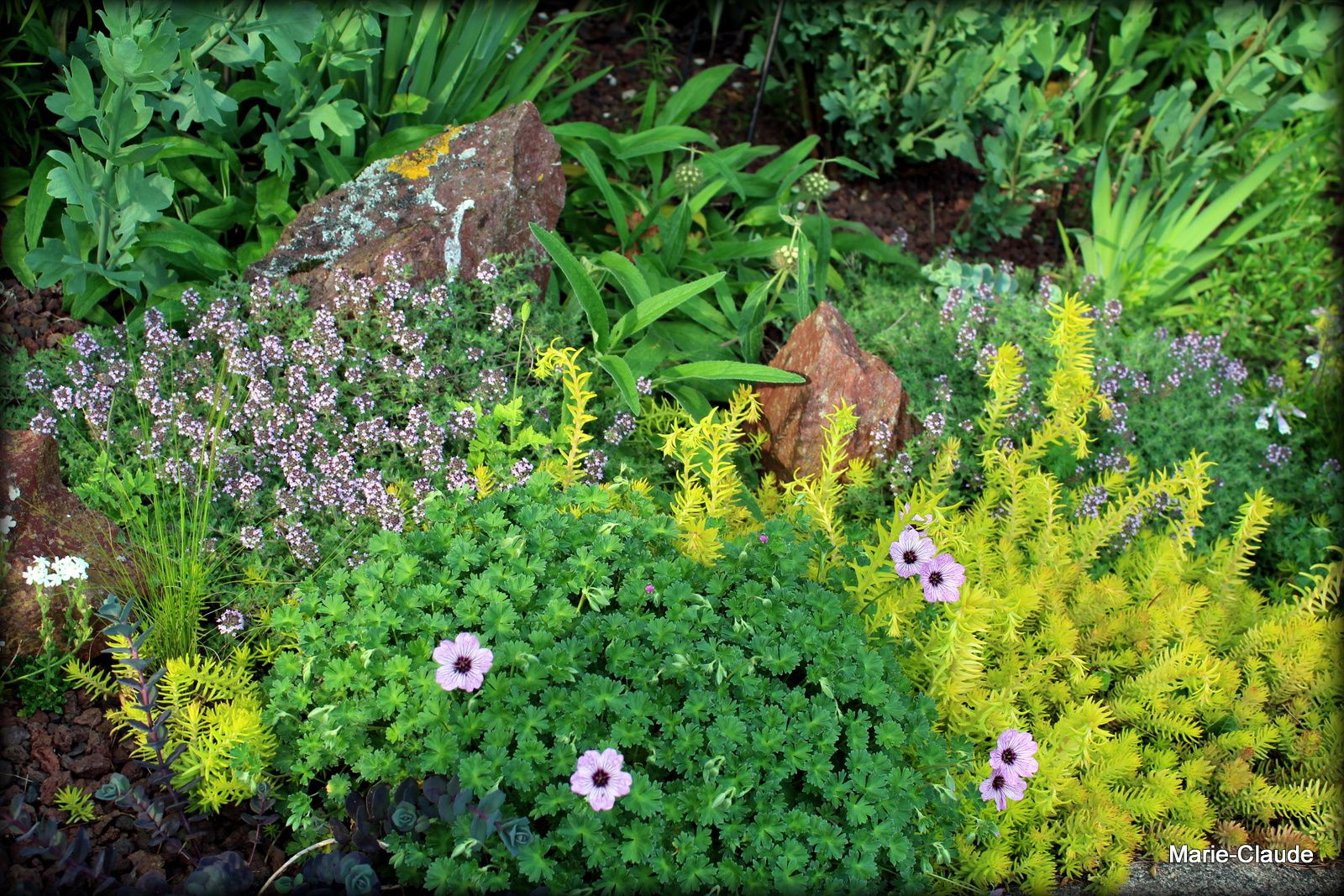 Une après-midi entre passionnés....de jardins, bien sûr !