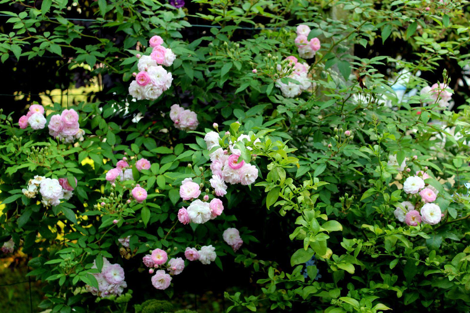 Un petit tour au jardin en fin d'été,