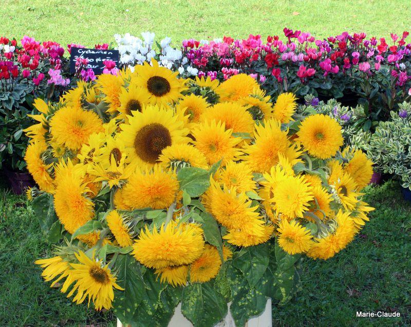 La fête des plantes au Parc Saint Vincent,