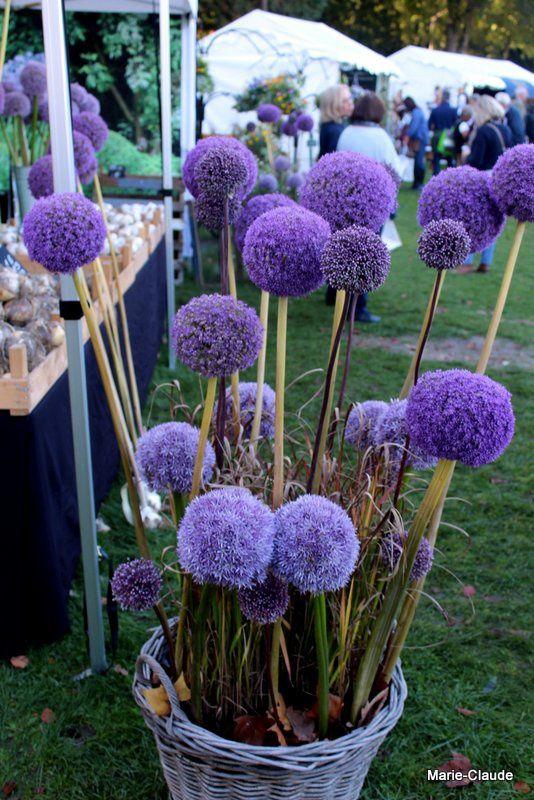 Chantilly, la fête des fleurs de l'été indien,