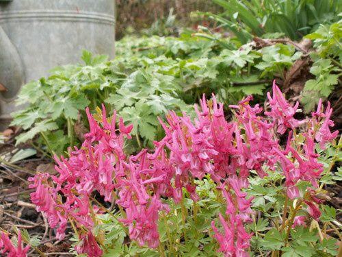 Travaux de jardin en avril - un renouvellement...