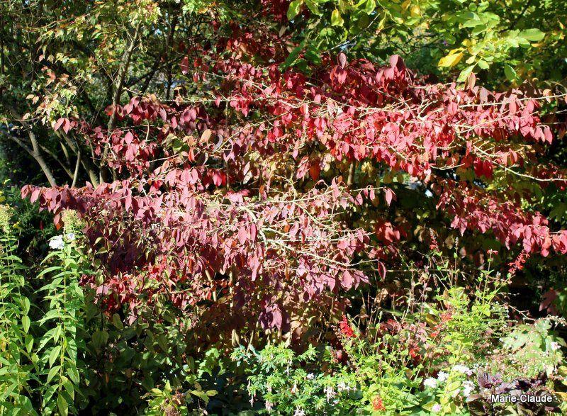 Début octobre, le jardin prend des couleurs,