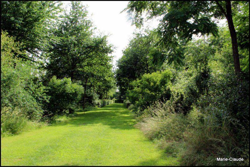 Le jardin de Chaligny ( suite )