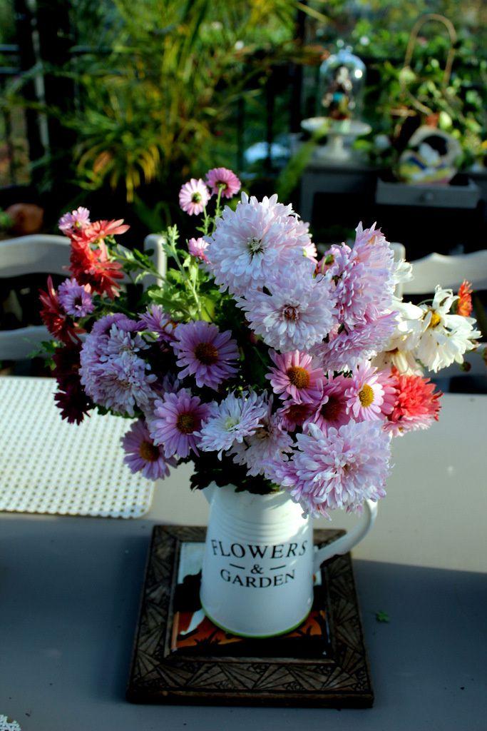 Collection de chrysanthèmes du jardin,