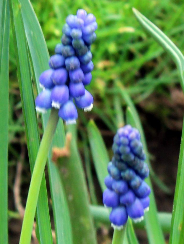 Bleus de mars,