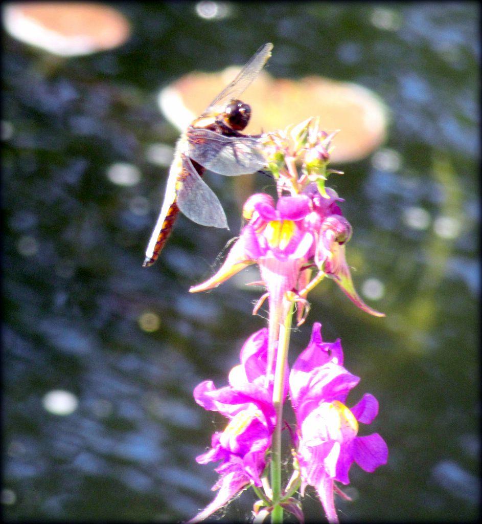 Un visiteur du bassin,
