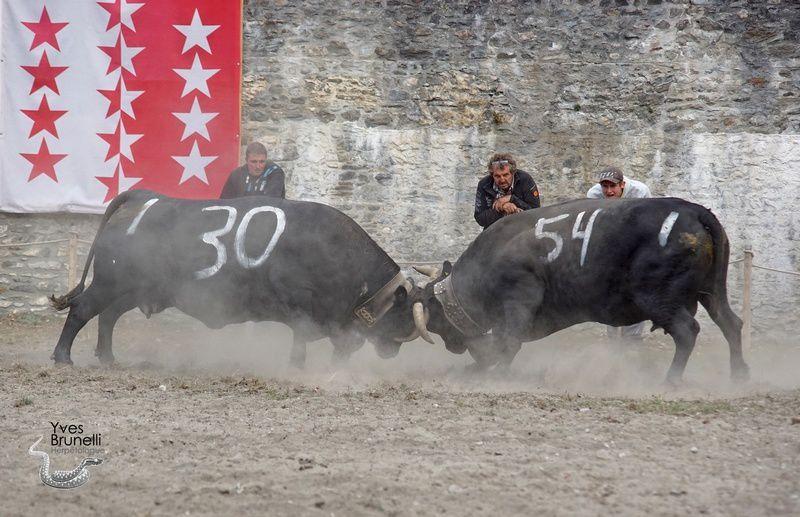 (30) BELLINE , 4ème de 1ère catégorie a l'etable du Chateau et (54) CORAIL , 6ème de 1ère catégorie a Christian Gonin .