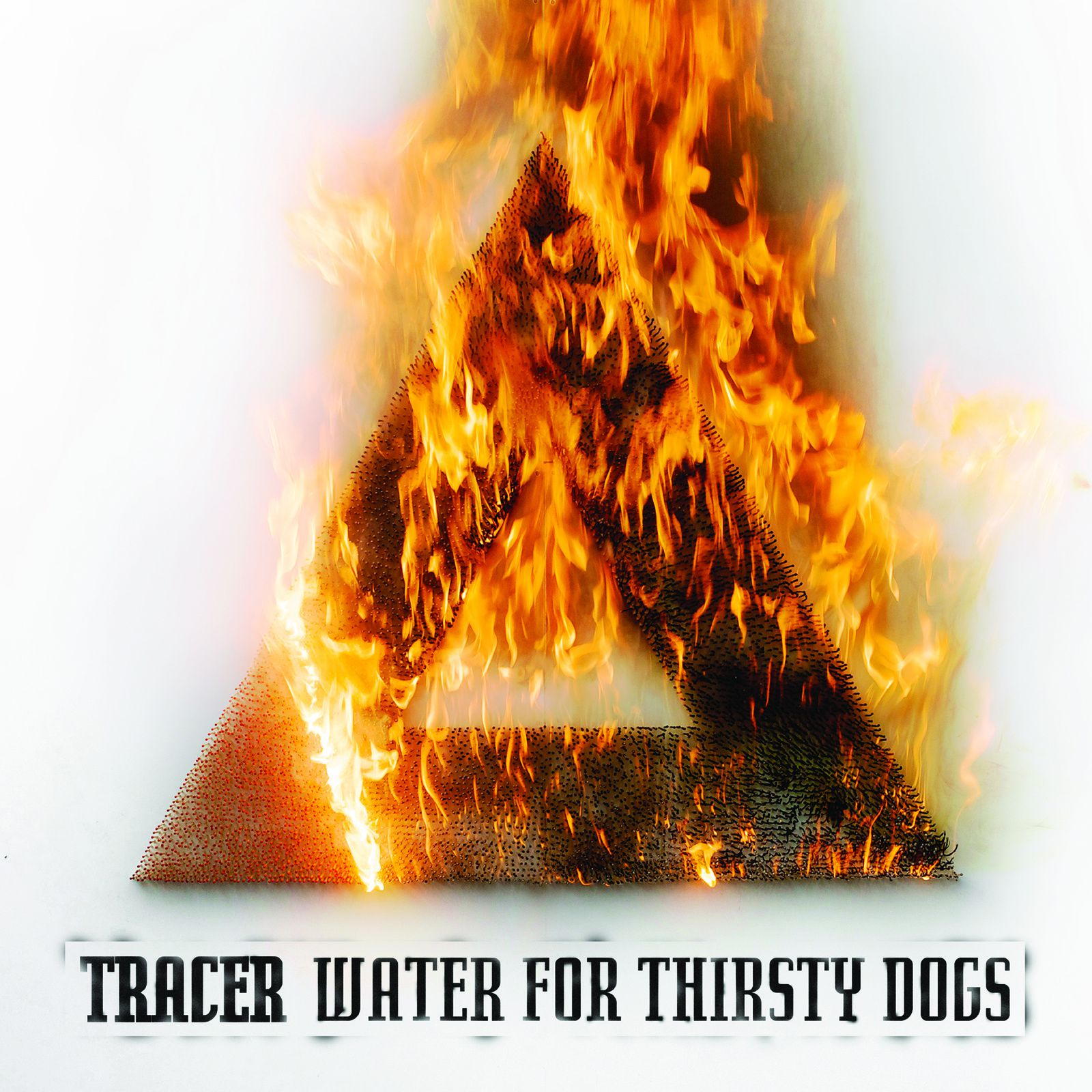"CD review TRACER ""Water for the thirsty dog"""