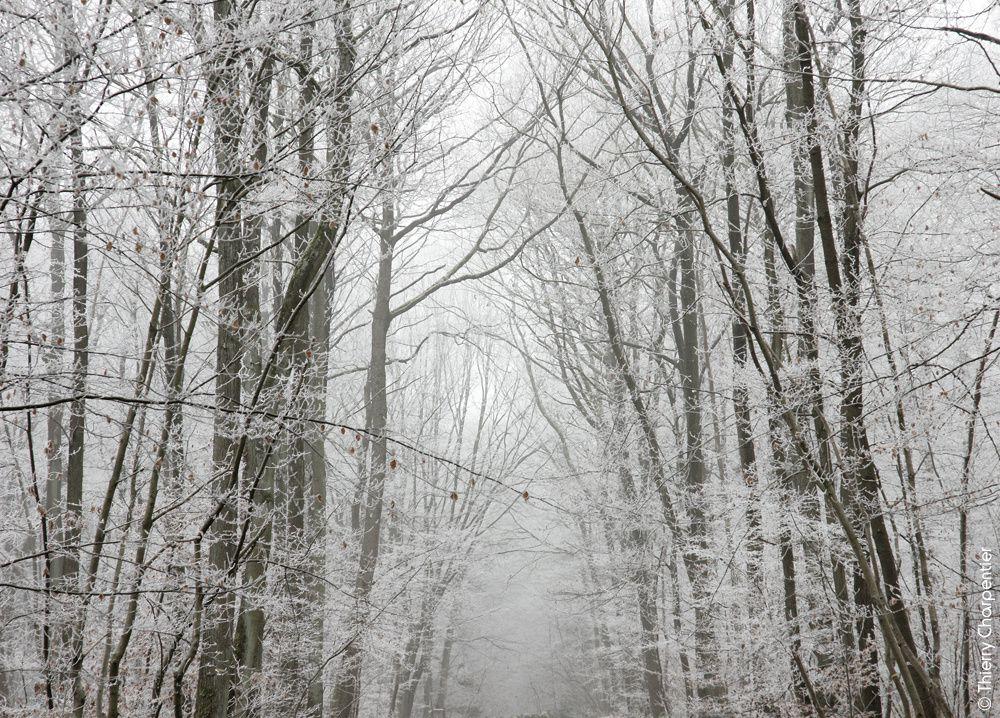 """La nature en """"Noir & blanc"""""""