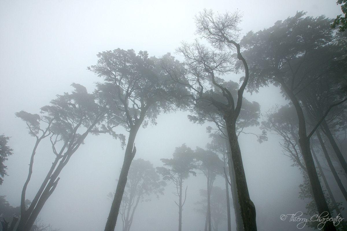 #Sintra #forest #lisbonne #portugal #lisboa #photoart #nature #landscape #paysage #arboretum #parc #park #arbre #tree #trees #panorama #foret