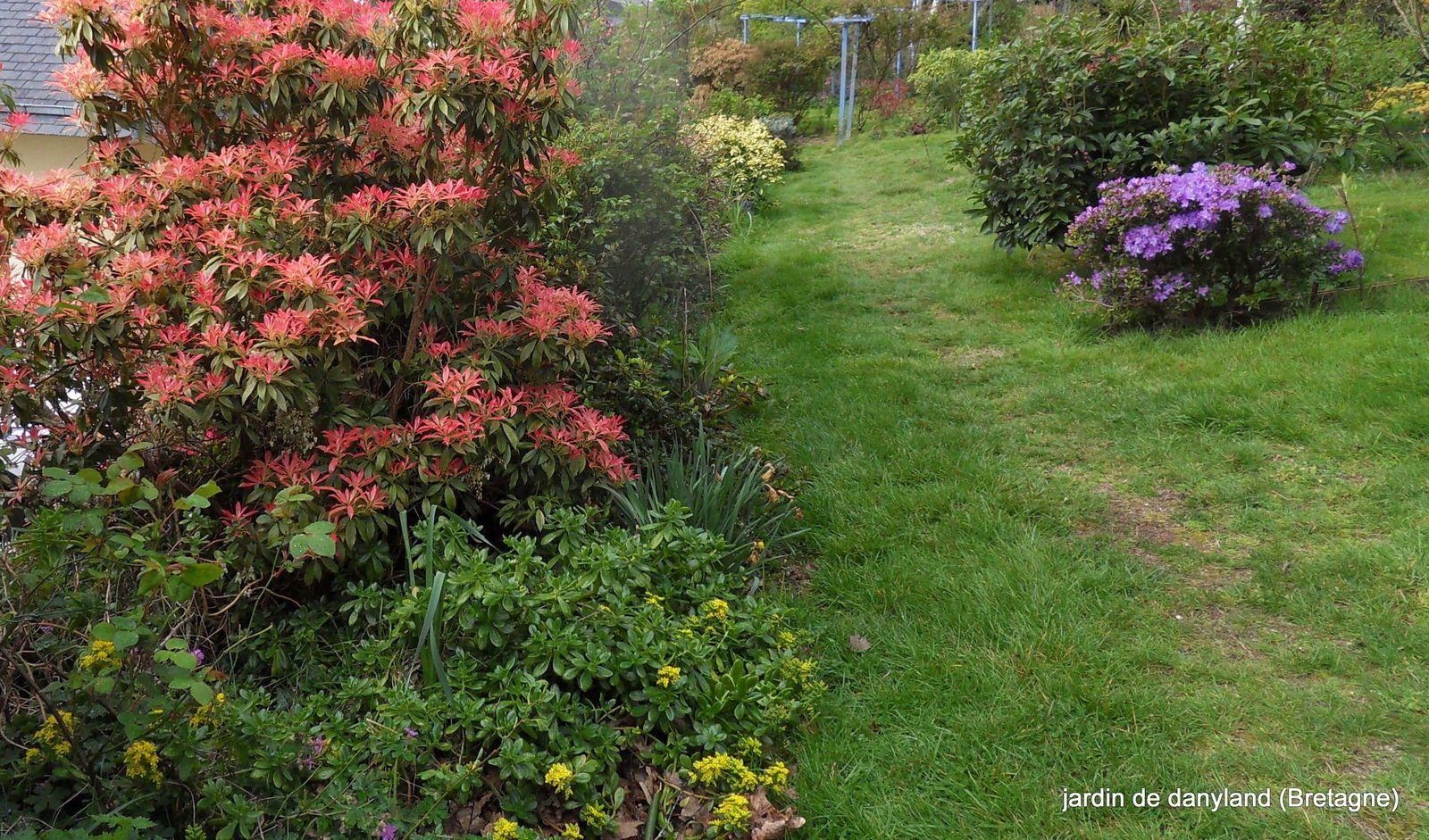 le jardin commence à prendre de belles couleurs !!!