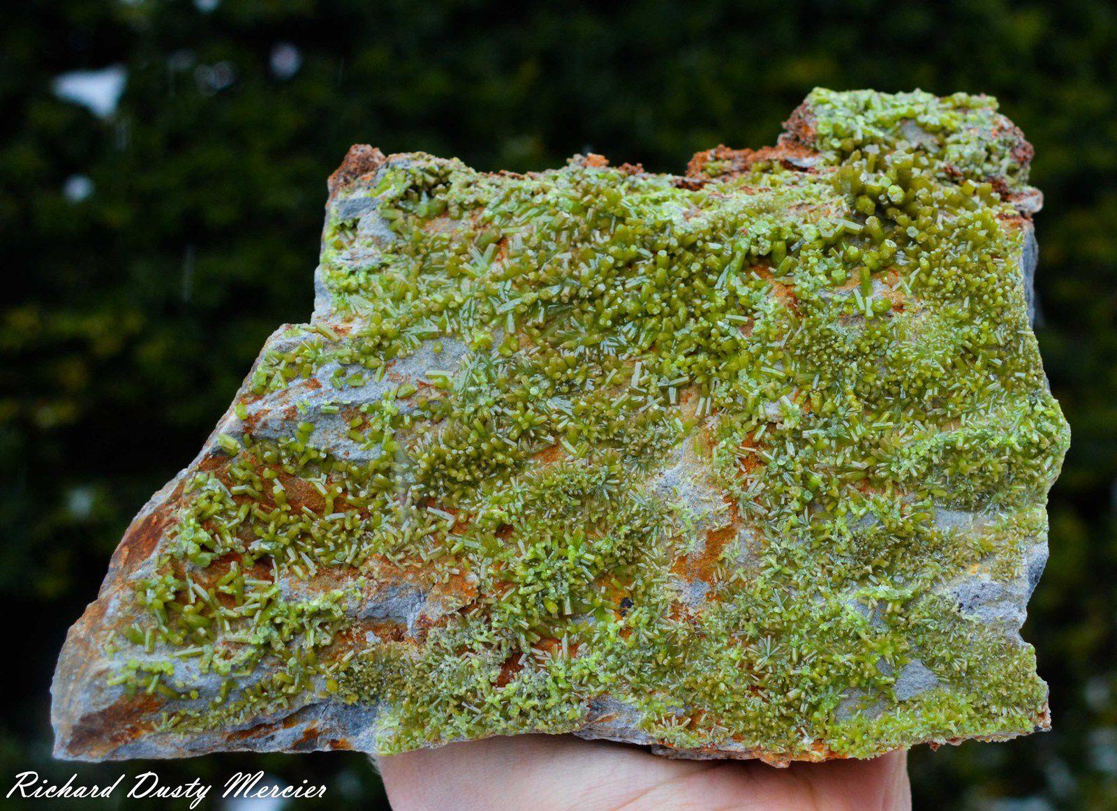 Pyromorphyte from China (Specimen and Photo: Richard Dusty Mercier)