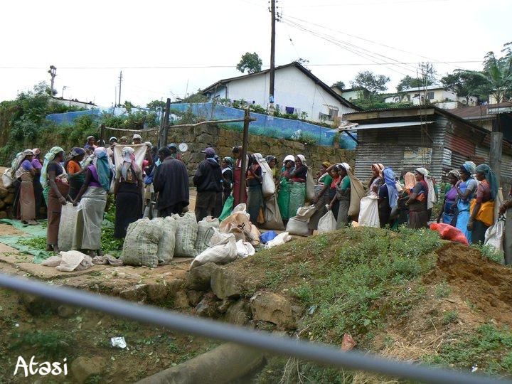 L'heure de la pesée pour les cueilleuses de thé, Nuwara Eliya