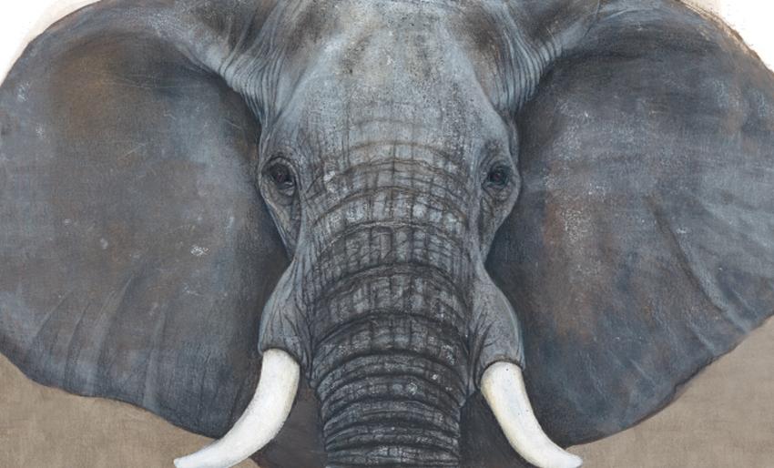 L'éléphant, Jenni Desmond, Les éditions des éléphants, 2019