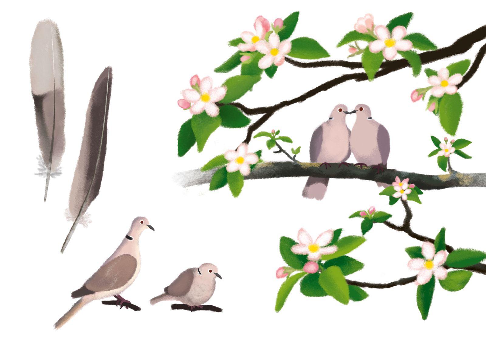 Les oiseaux de mon jardin, Adeline Ruel, Père Castor, 2020