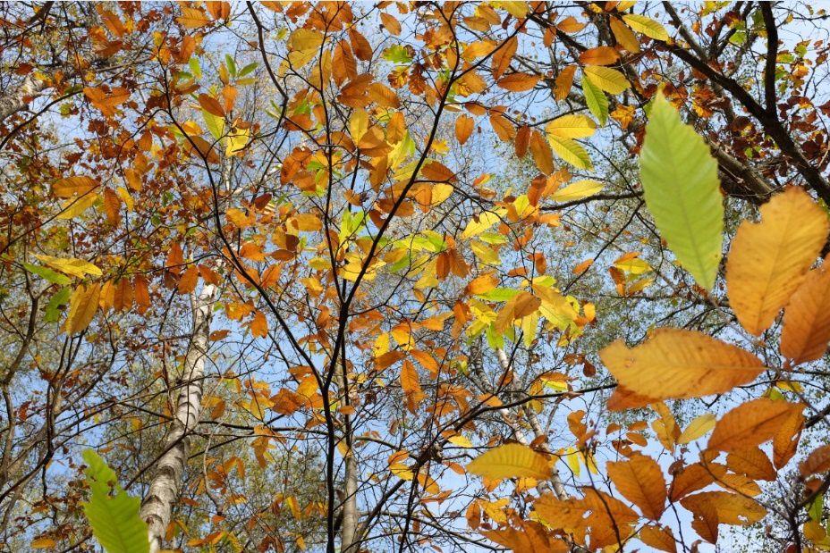 Feuillages d'automne en forêt de Rambouillet. Photo: Pierre-Olivier Combelles