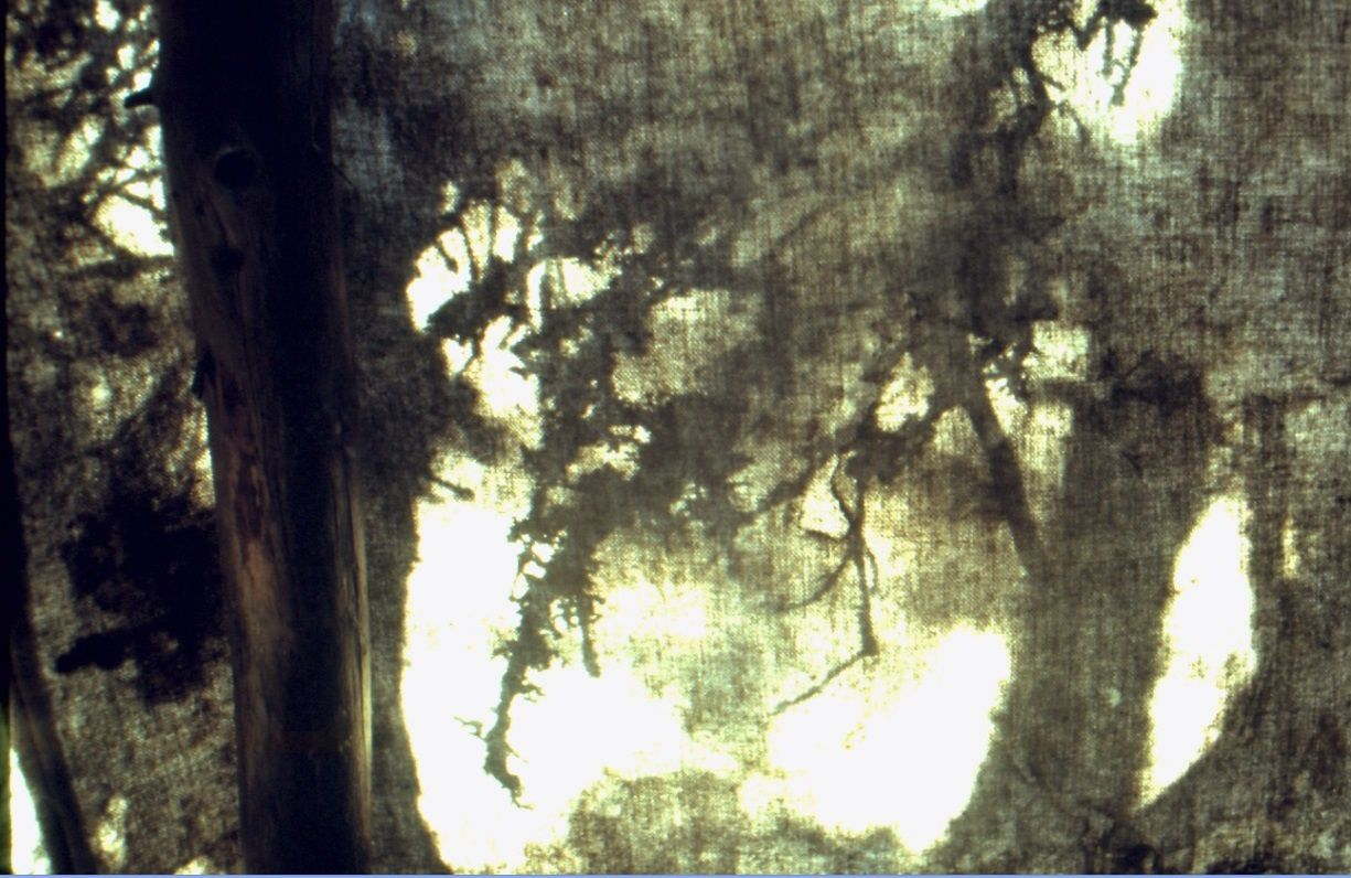 Le matin, le soleil dessine les ombres chinoises des sapins et des épinettes sur  toile de la tente montagnaise. Quelque part dans le Québec-Labrador... automne 1992. Photo: Pierre-Olivier Combelles