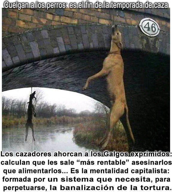 Fin de la temporada de caza en España: Matanza de perros (Cecilia Zamudio)