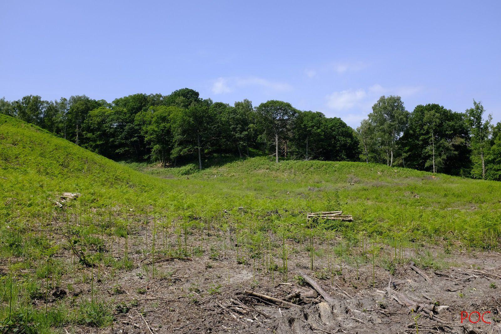 """Comment, à notre époque et dans une """"forêt de protection"""", peut-on se livrer à une destruction pareille, la pire forme d'exploitation forestière ?"""