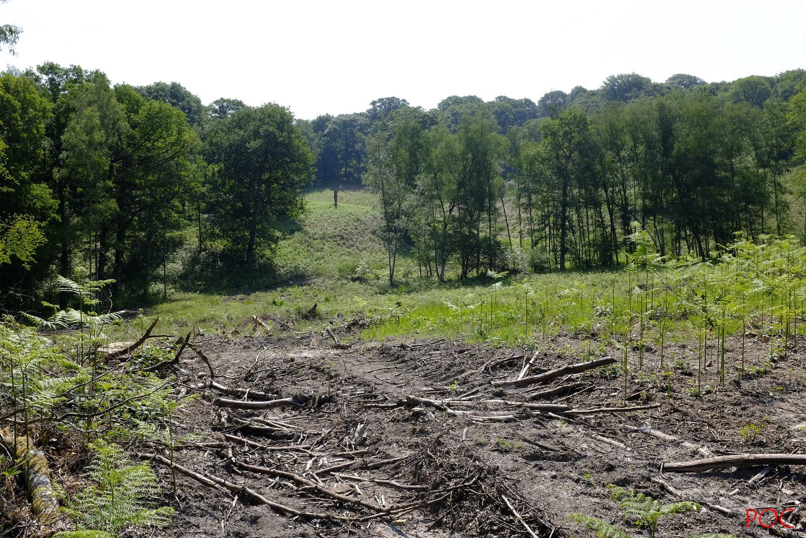 Le sol est ravagé par les lourds engins mécaniques. Il semble que la maladie de Lyme est due à l'exploitation intensive des forêts qui détruisent son habitat et bouleversent les relations des tiques avec leurs hôtes et leurs prédateurs naturels.