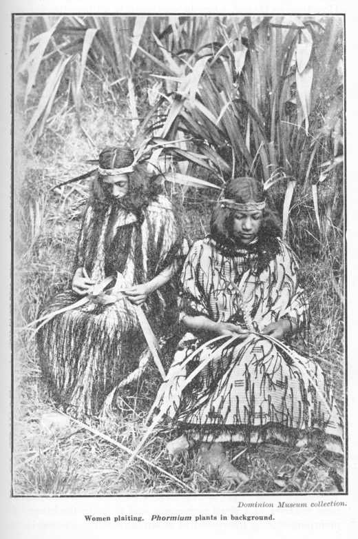"""Avis de recherche : le Lin de Nouvelle-Zélande (""""harakeke""""en māori, Phormium tenax) dans le Pacifique"""