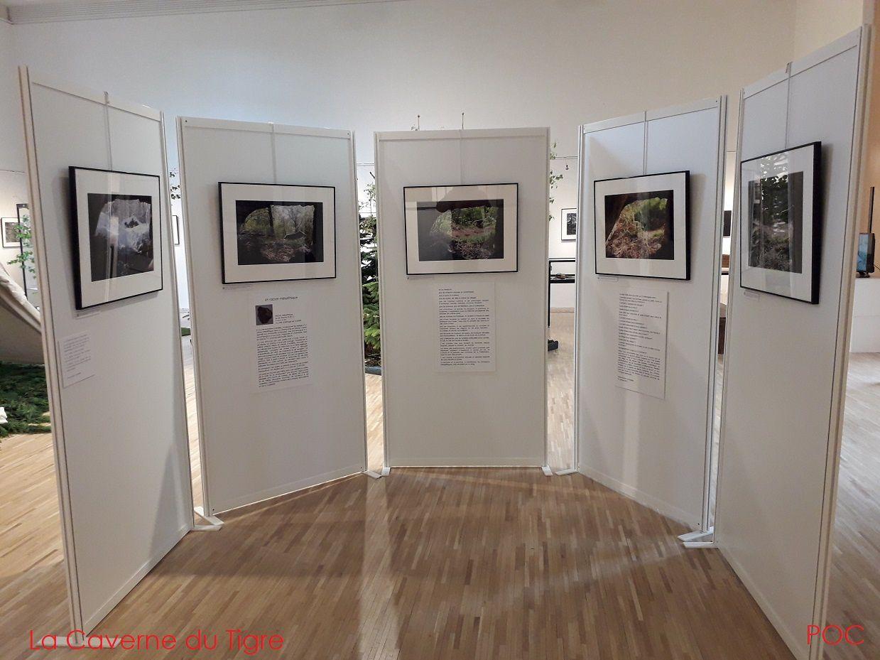 """Exposition """"Le chemin de la forêt"""" (Rambouillet, Pôle culturel La Lanterne, mai 2019)"""