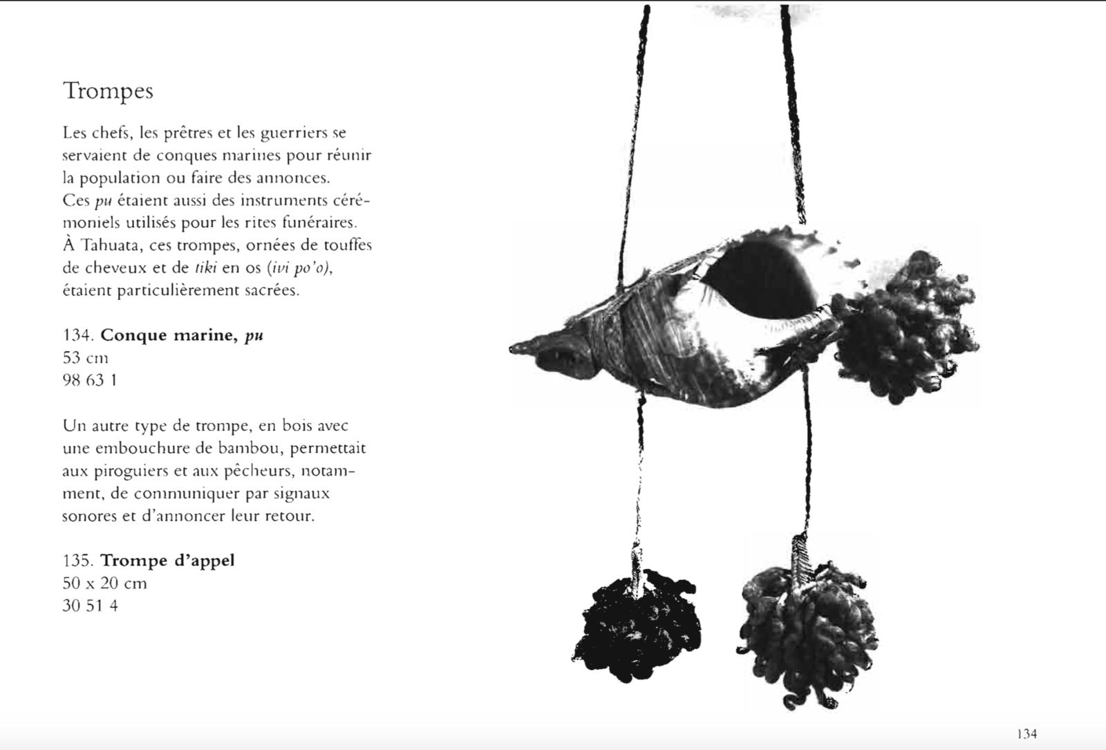 "Triton māori (""pūtātara"")"