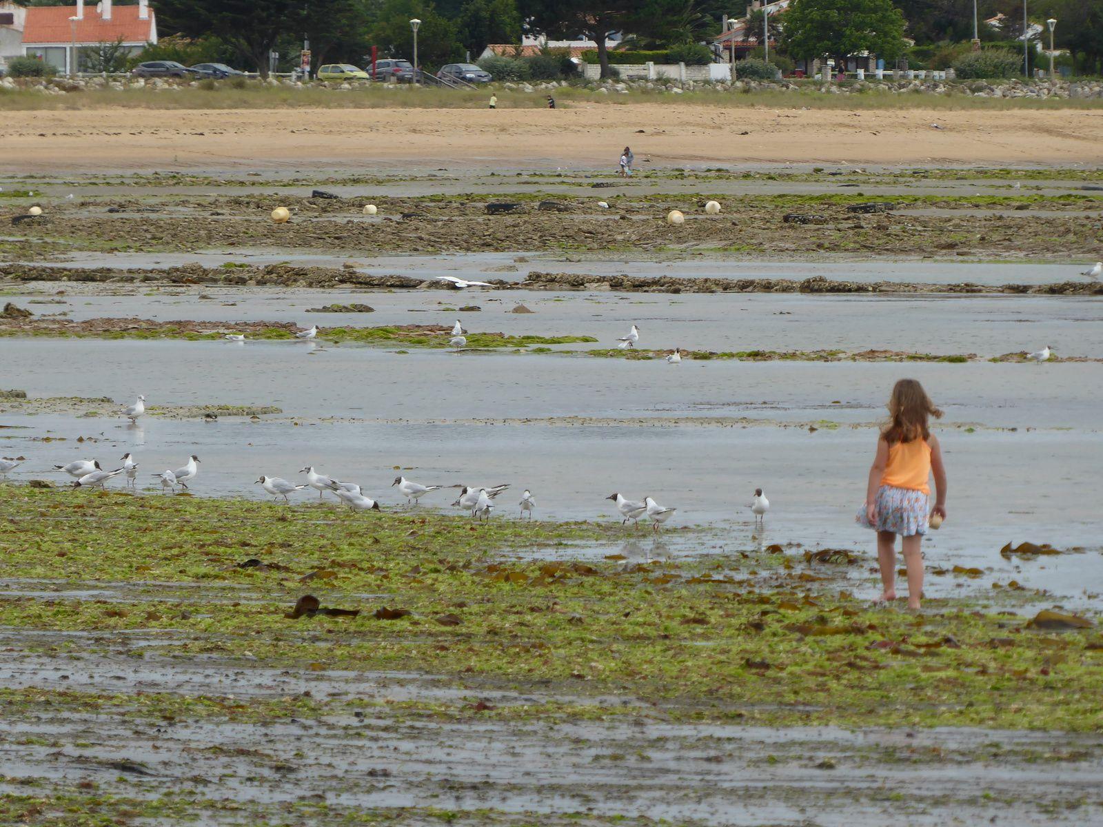 Les vacances sur l'île d'Oléron: la plage