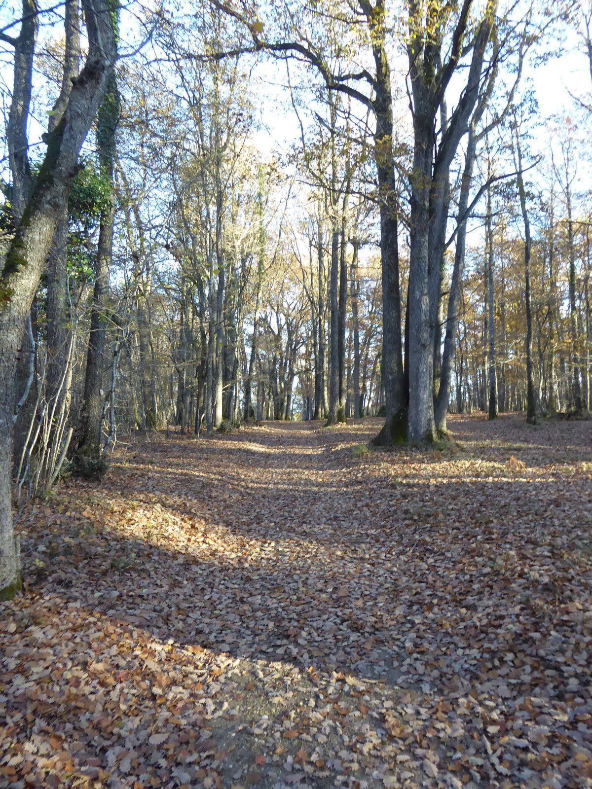 La réserve du Pinail suivie d'une promenade en forêt