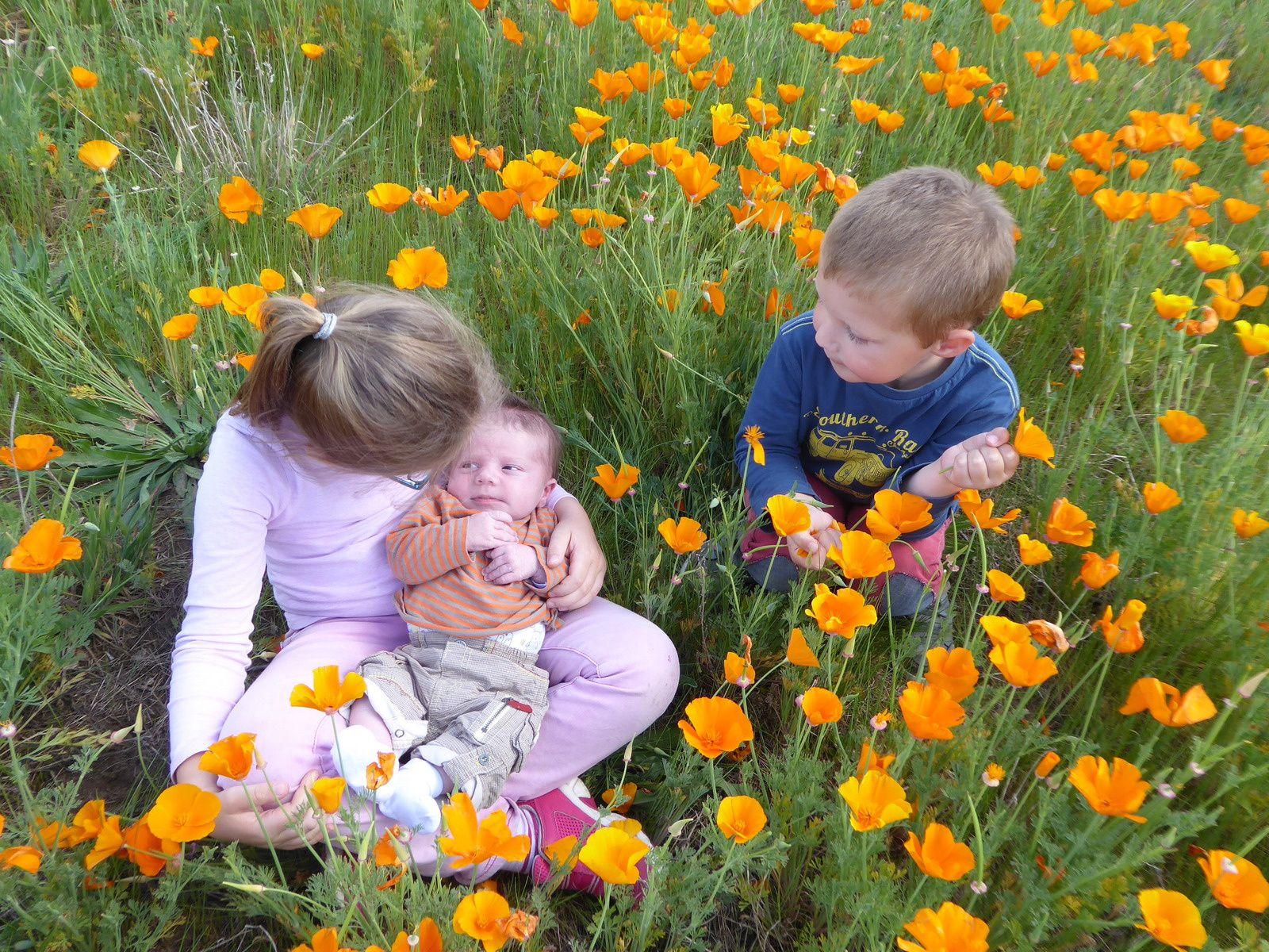 Des fleurs parmi les fleurs