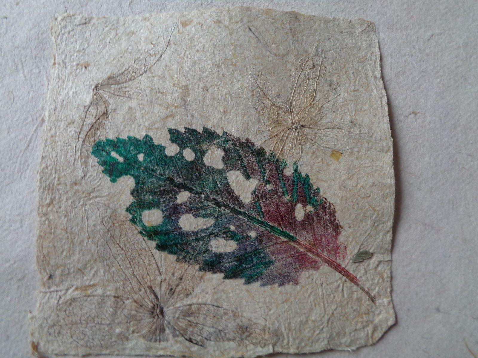 Monotypes de végétaux sur papiers de plantes (bambou, orange, yucca,tomate, lapacho, coqueret, ortie,chanvre, ....)
