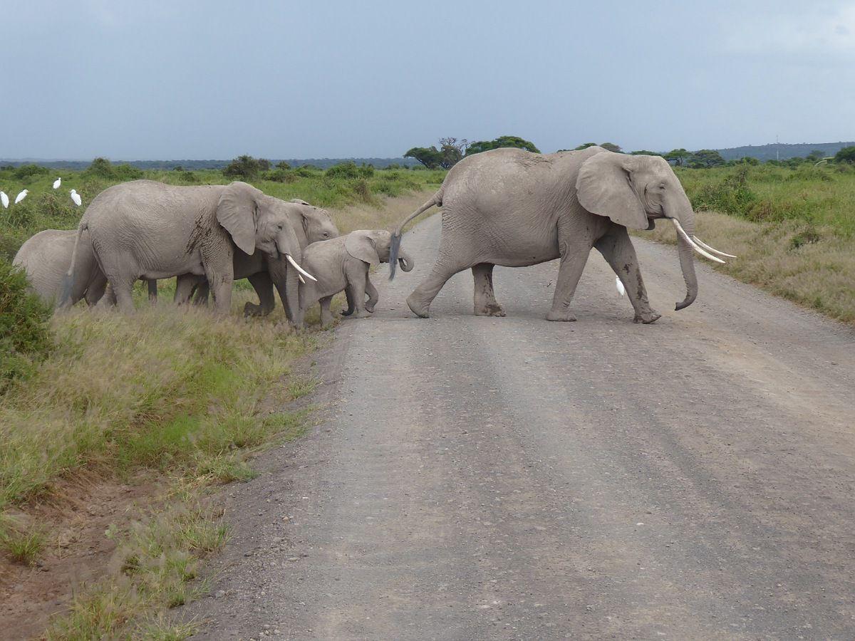 Amboseli 3