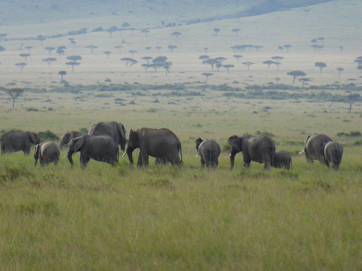 Masaï  Mara