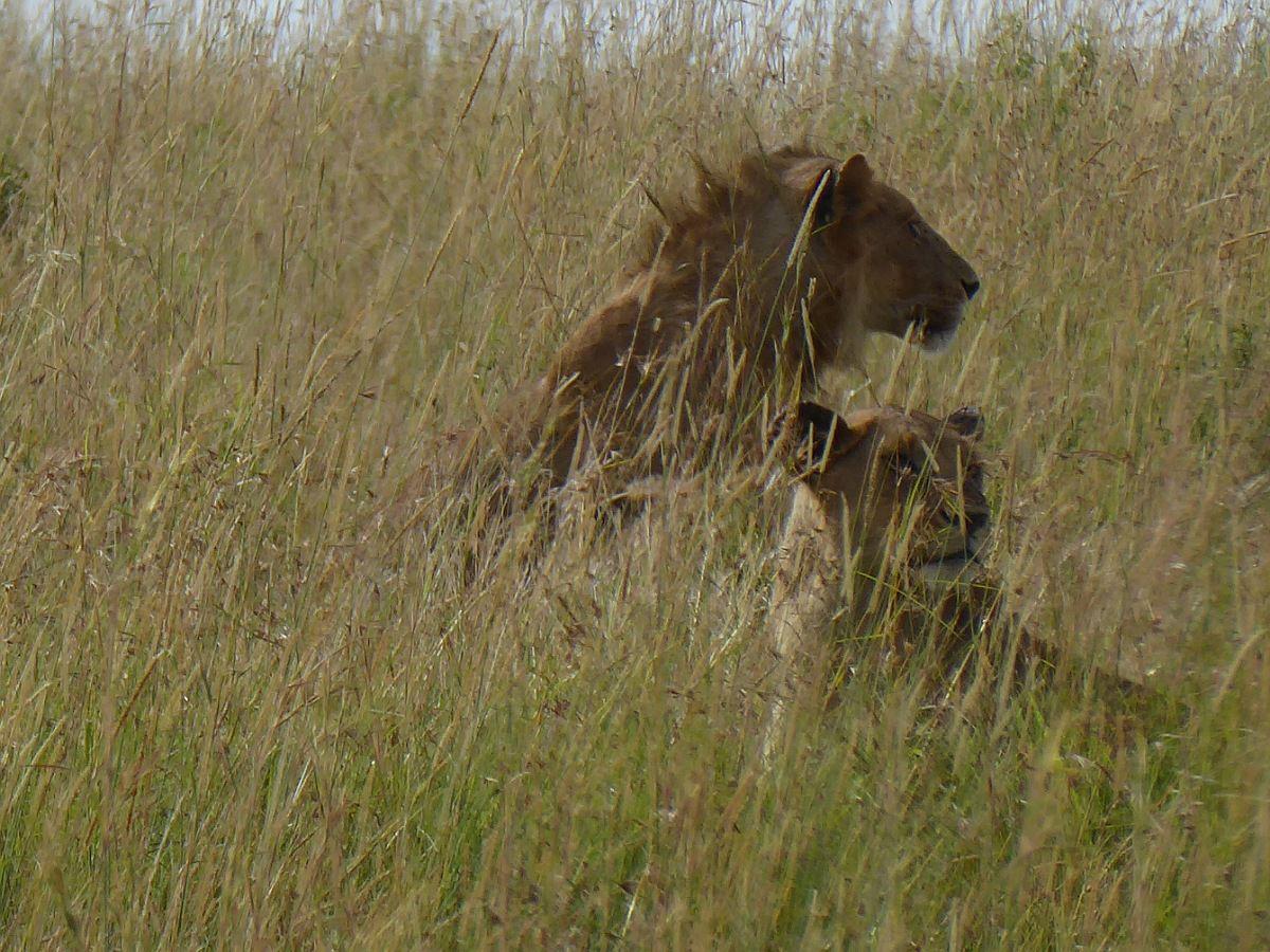 Masaï Mara 2