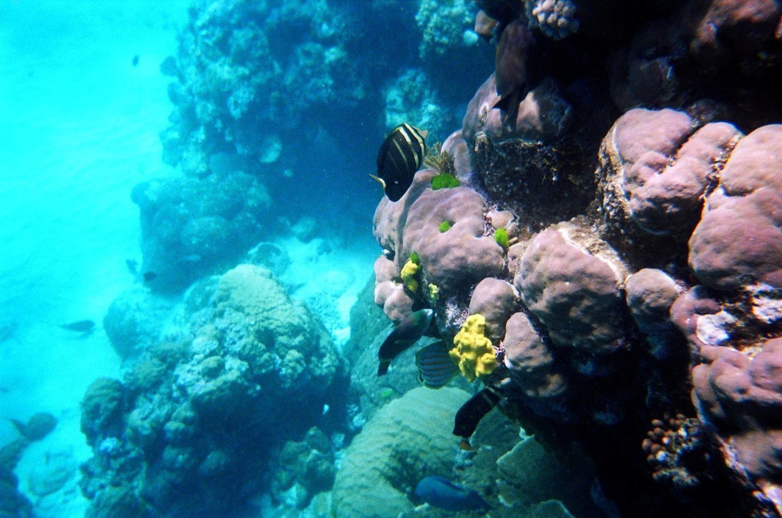 poissons -La barrière de corail d'Australie