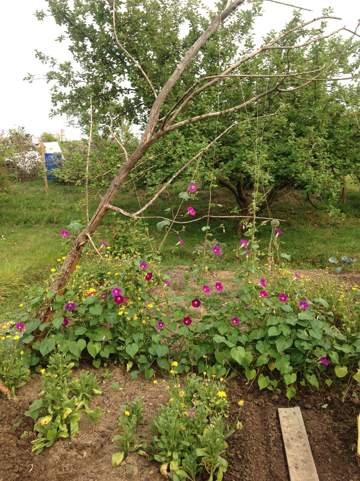 jardin  fleurs harpe citrouille - charlotteblabla blog-