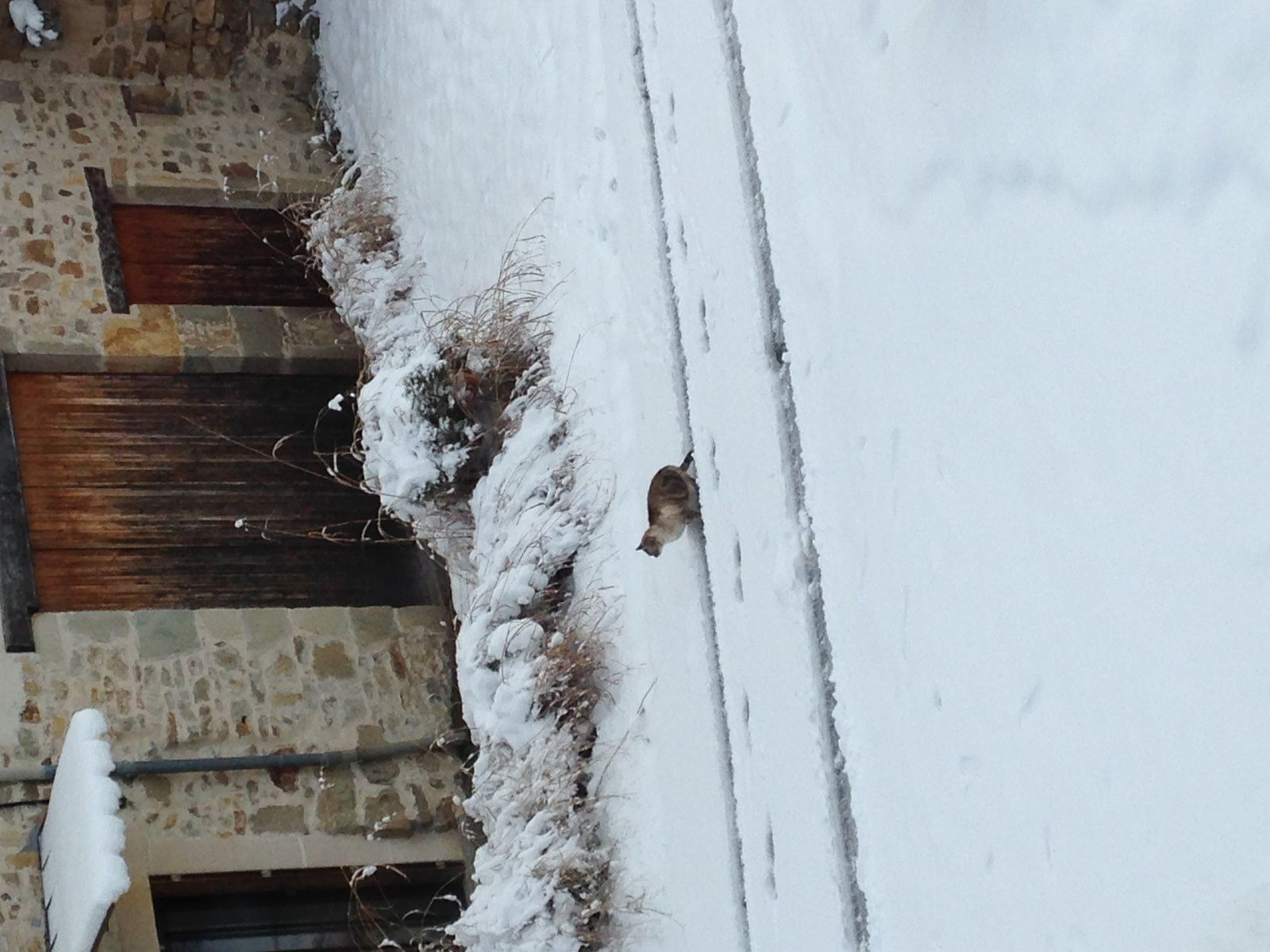 #neige #egliseneuve-pres-billom #auvergne #france # charlotteblabla