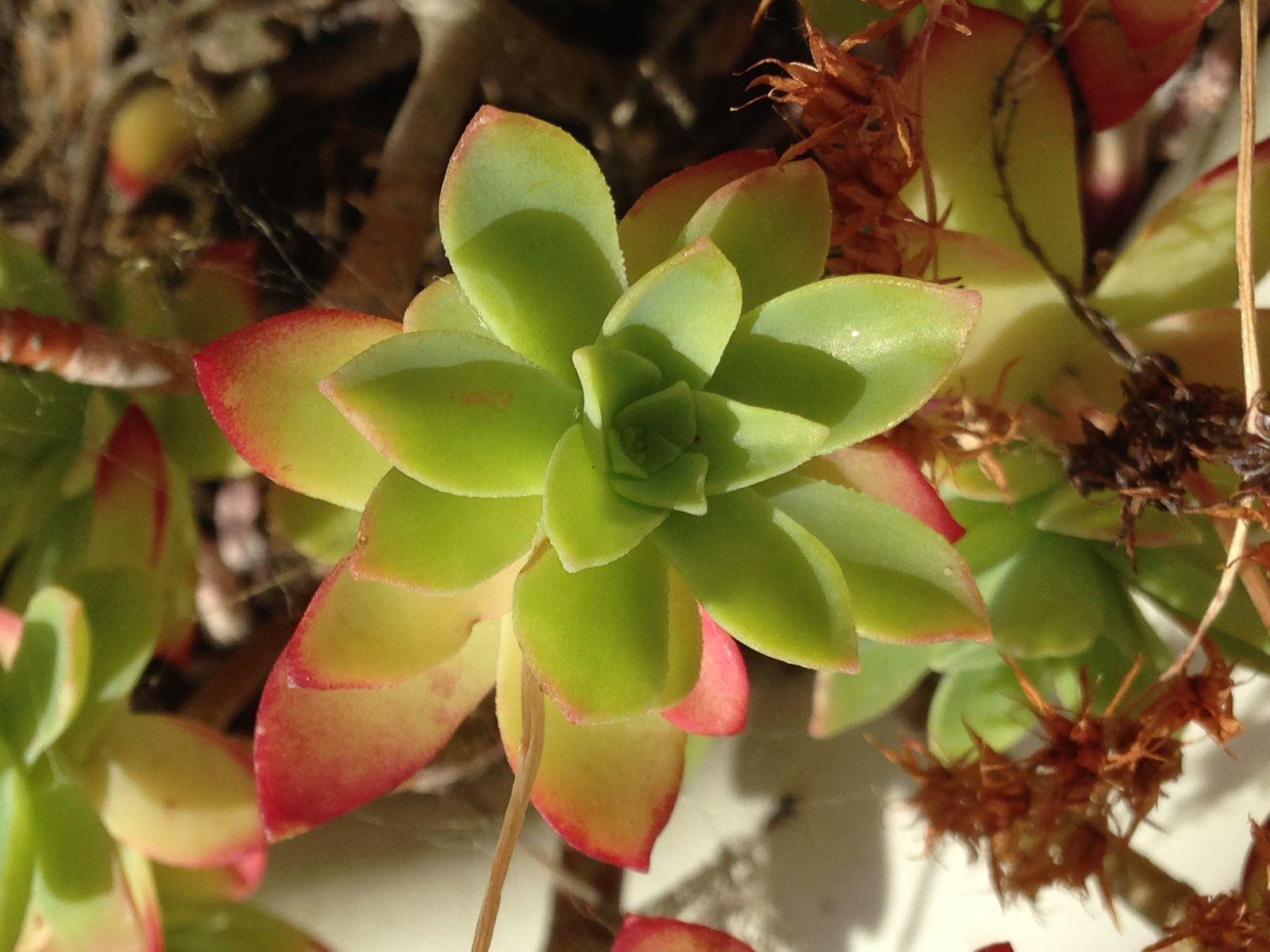 #fleur #nature #charlotteblabla blog